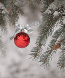 Christmas Ornament Hanging From Tree Outdoors Royalty Free Stock Image