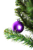 Christmas ornament hanging from a xmas tree branch Stock Images