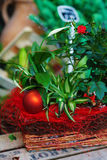 Christmas ornament and plants. Green plants and red ball and filling Royalty Free Stock Photo