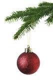 Christmas ornament on the tree Stock Images