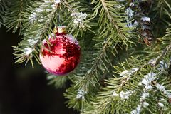 Christmas Ornament on Tree. Red Christmas ornament hanging on a fir tree with a light dusting of snow royalty free stock photo
