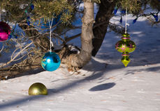 Christmas ornaments dangling from tree. Colorful Christmas ornaments hanging from bottom pine tree above snow Royalty Free Stock Images