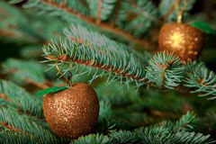 Christmas ornaments on live Christmas tree Stock Images