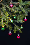 Christmas ornaments and pine branches on black background. Purple and green christmas balls on green spruce branch.Christmas balls Royalty Free Stock Image