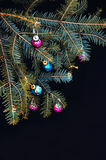 Christmas ornaments and pine branches on black background. Purple and green christmas balls on green spruce branch.Christmas balls Stock Photography