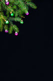 Christmas ornaments and pine branches on black background. Purple and green christmas balls on green spruce branch.Christmas balls Royalty Free Stock Photography