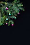 Christmas ornaments and pine branches on black background. Purple and green christmas balls on green spruce branch.Christmas balls Stock Photos