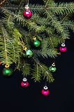 Christmas ornaments and pine branches on black background. Purple and green christmas balls on green spruce branch.Christmas balls Stock Image