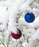 Christmas Ornaments in the Snow. Freshly fallen snow covers the branches theses Christmas Ornaments sit on Stock Photo