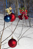 Christmas ornaments in tree. Christmas-tree decorations on dormant winter little birch royalty free stock image