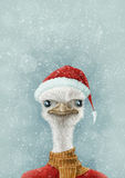 Christmas Ostrich In the Snow Royalty Free Stock Images
