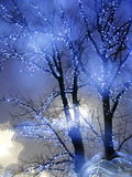 Christmas outdoor tree decoration Royalty Free Stock Images