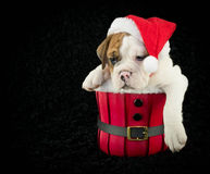 Is Christmas Over yet? Royalty Free Stock Photos