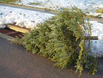 Christmas is Over. Christmas Tree discarded for curbside trash Royalty Free Stock Photos