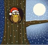 Christmas owl stock image