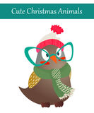Christmas Owl Bird Wearing Warm Winter Clothes. Cute Merry Christmas Animal Illustration. Festive Cold Holidays Theme. Colorful Owl Bird Wearing Warm Winter Royalty Free Stock Images