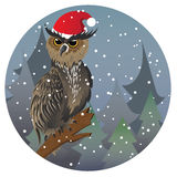 Christmas Owl Royalty Free Stock Photo