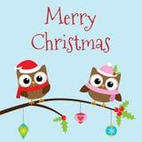 Christmas owls on branch Stock Photos