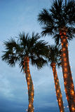 Christmas Palm Tree Royalty Free Stock Photos