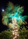 Christmas palm tree. Palm tree covered in christmas lights during holiday season with moon shining in the distance royalty free stock photo