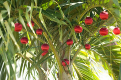 Christmas Palm Tree. Palm Tree Decorated with red christmas ornaments Royalty Free Stock Photo