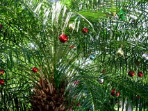 Christmas Palm tree decorated with shiny red ornaments in the Florida Keys royalty free stock images