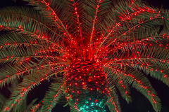 Christmas Palm Tree Stock Image
