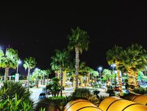 Lights in Palm trees stock photo