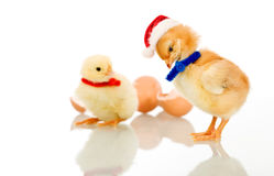 Christmas party chicks - isolated Royalty Free Stock Photos