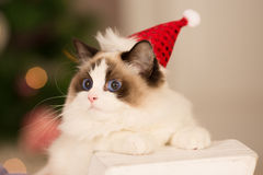 Christmas party, winter holidays woman with cat. New year girl. Royalty Free Stock Photos