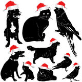Christmas pet animal Stock Images