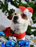 Christmas pet Stock Images