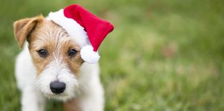 Christmas pet dog with Santa hat royalty free stock images