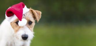 Christmas pet dog web banner royalty free stock photo