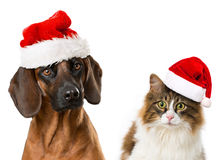 Christmas pets Stock Image