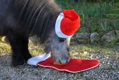 Christmas pets. Miniature horse wearing a Santa hat. stock photography