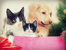 Christmas Pets. In retro style Stock Photography