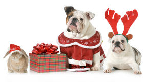 Christmas pets. Three pets dressed up for christmas isolated on white background Stock Images