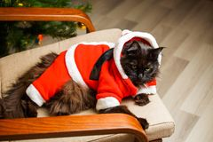 Christmas photo of black cat in Santa costume in armchair. Against background of tree with garland Stock Photography