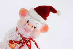 Christmas pig Stock Images
