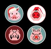 Christmas Pig Stickers royalty free stock images