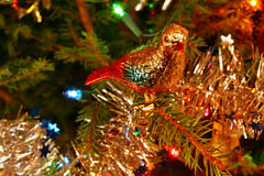 Christmas pigeon Stock Photo