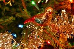 Christmas pigeon Stock Photo