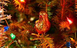 Christmas pigeon Royalty Free Stock Photo