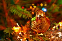 Christmas pigeon Royalty Free Stock Image