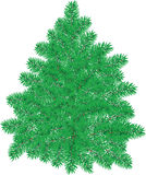 Christmas pine Royalty Free Stock Photo