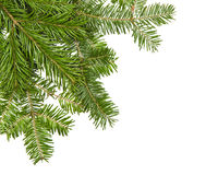 Christmas pine Royalty Free Stock Photography