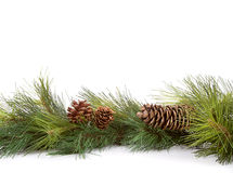 Christmas pine branches Royalty Free Stock Images