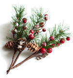 Christmas pine branches with berries royalty free stock images