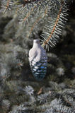 Christmas pine cone and branch of Christmas tree. On abstract background Stock Photography